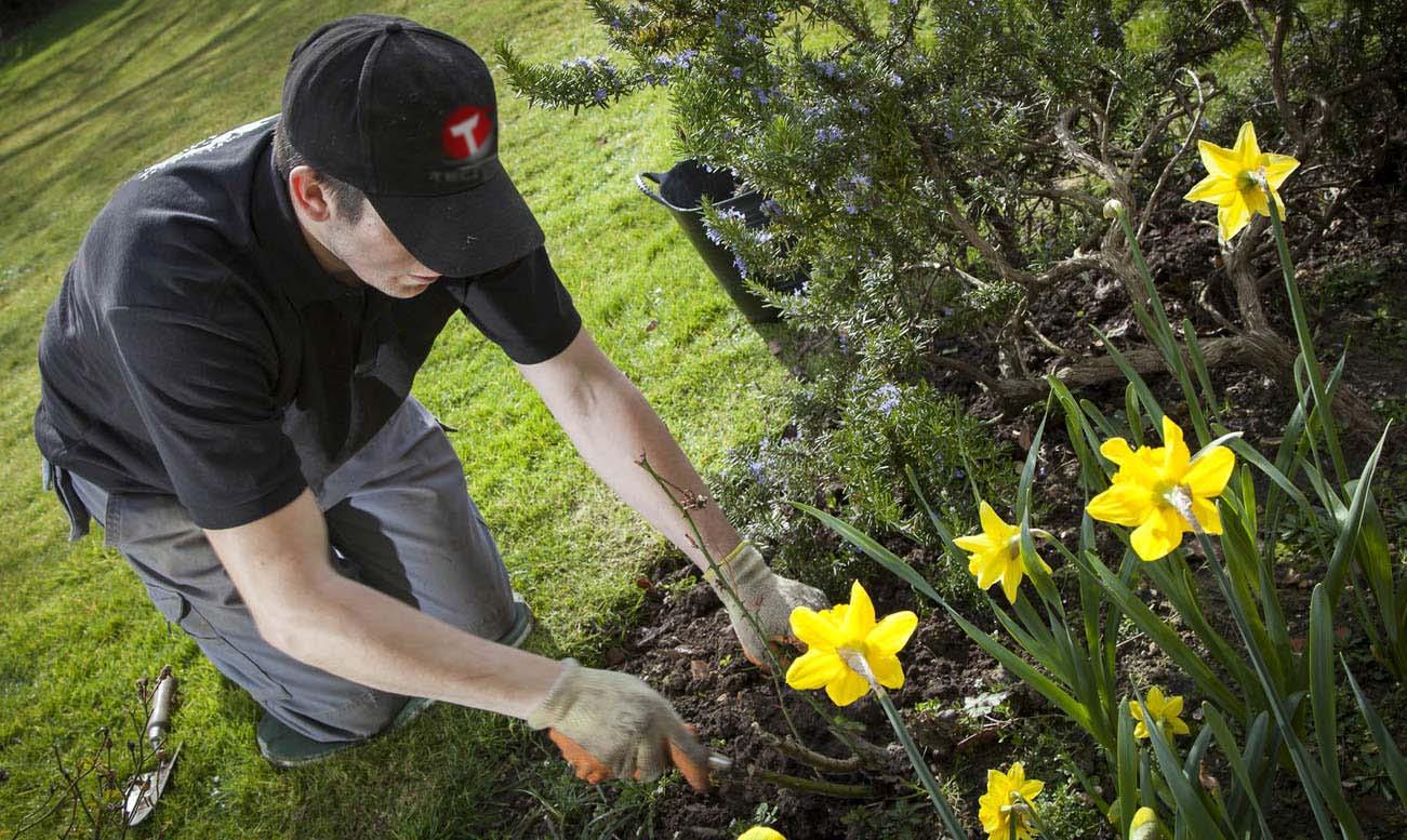 Jardinero realizando trabajo en jardín